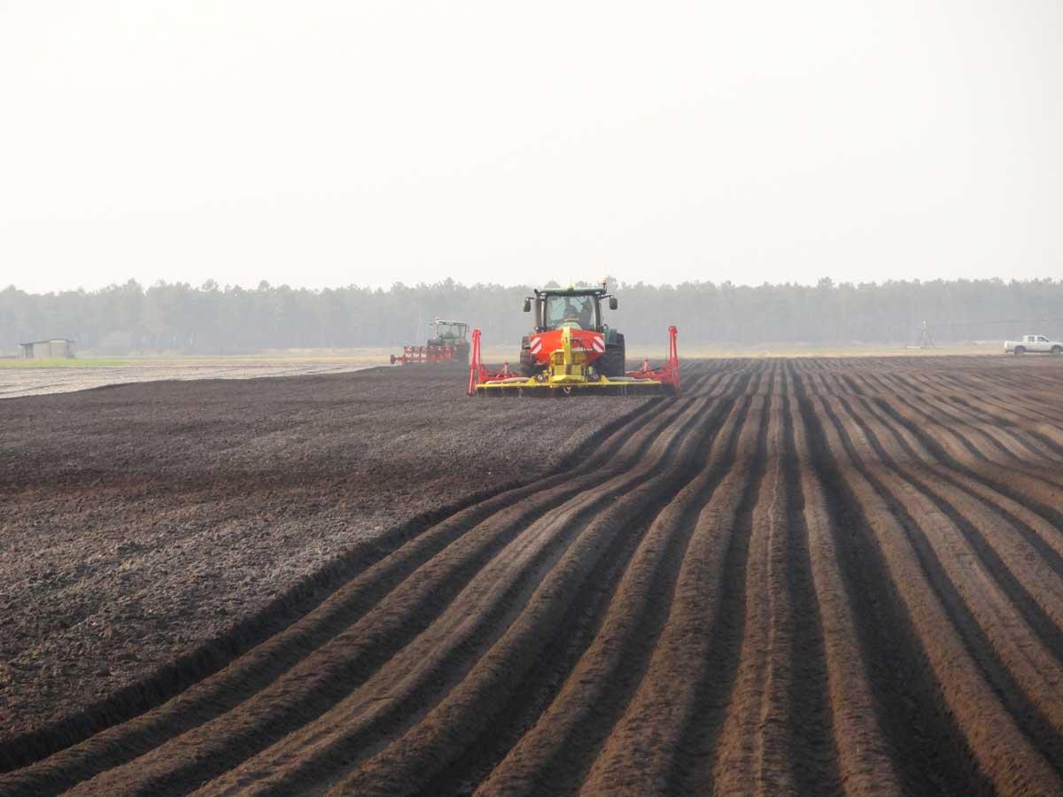 La production de carottes